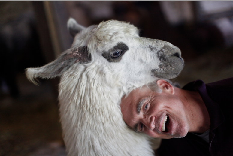 CELEBRATE getting to know your Llama